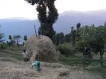 Farm Stay Crops